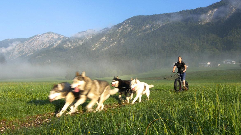 Hondensteppen